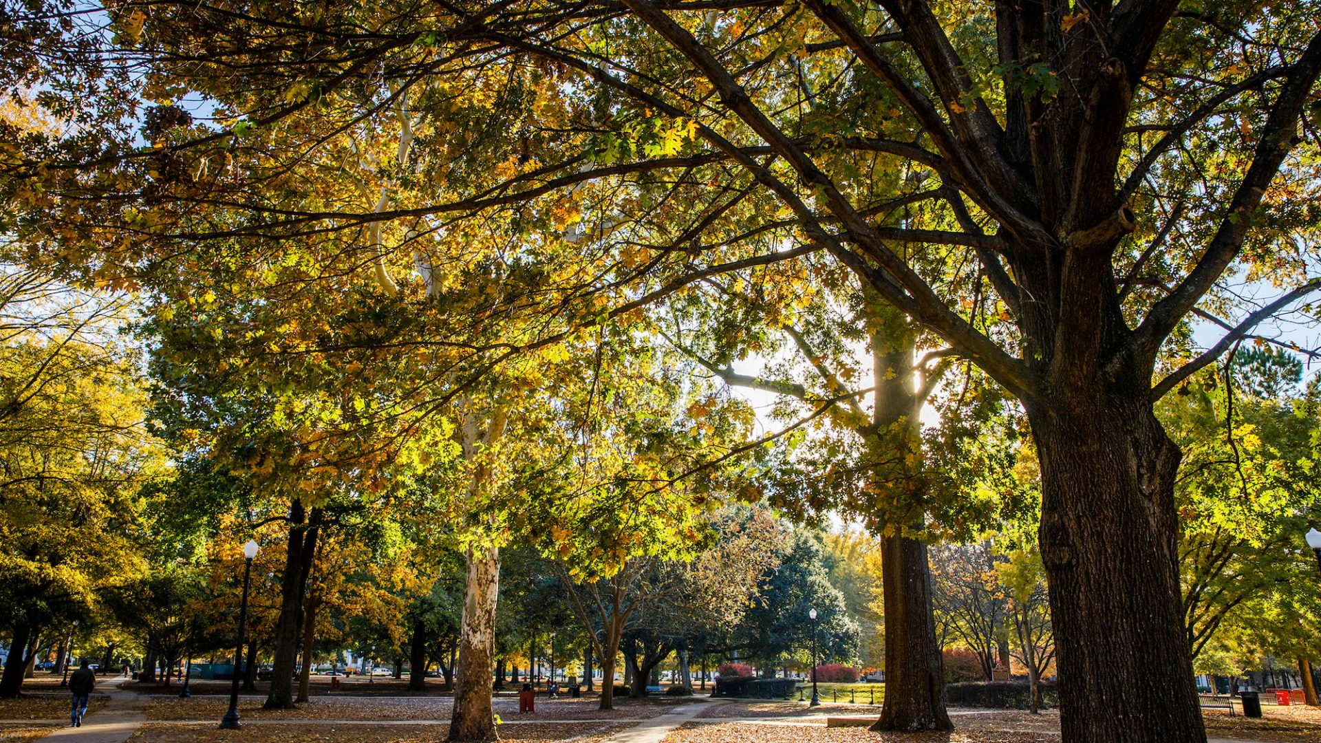 fall yellow tree
